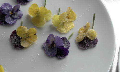 Kandierte Blüten der Stiefmütterchen